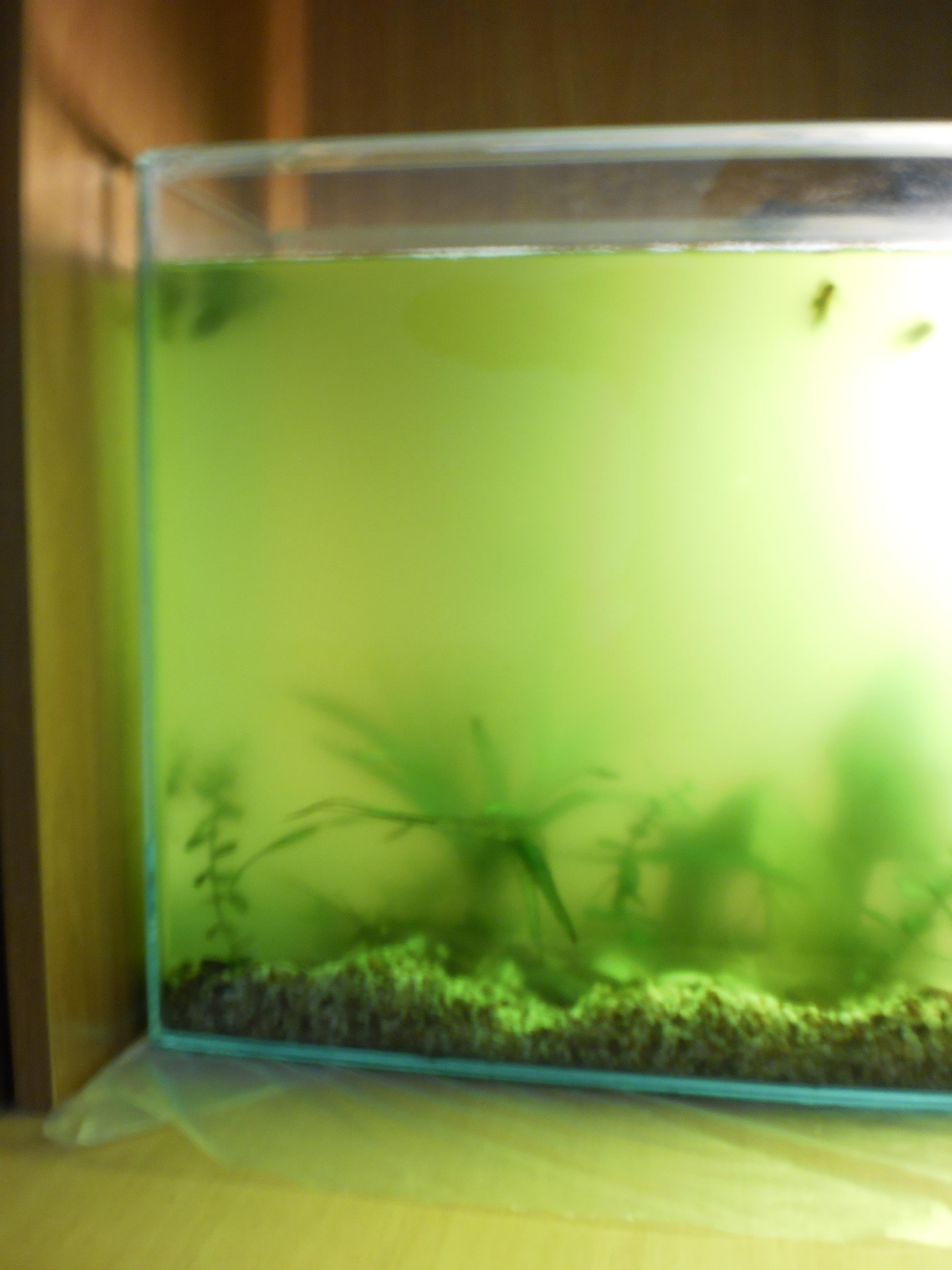 Как сделать чтобы вода в аквариуме была чистой 89