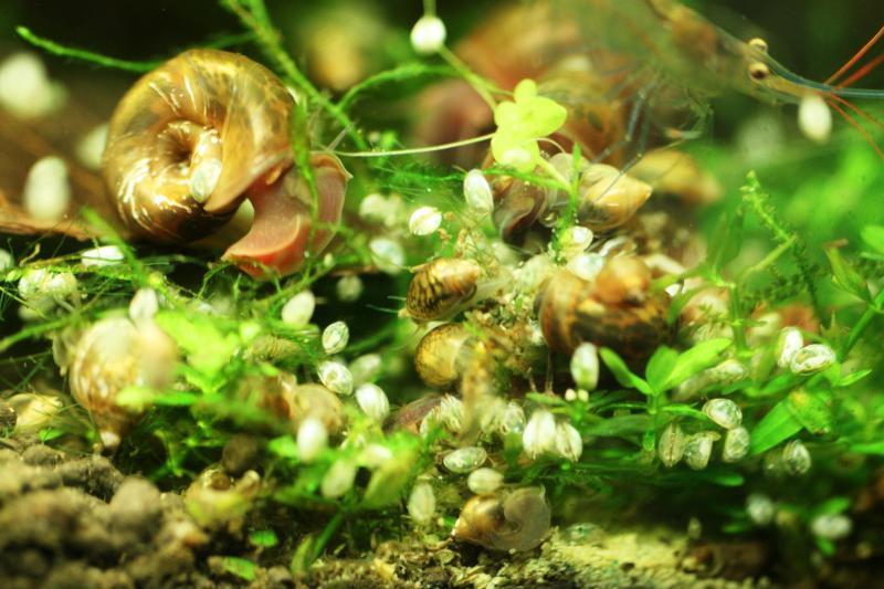 какие могут быть паразиты в организме человека