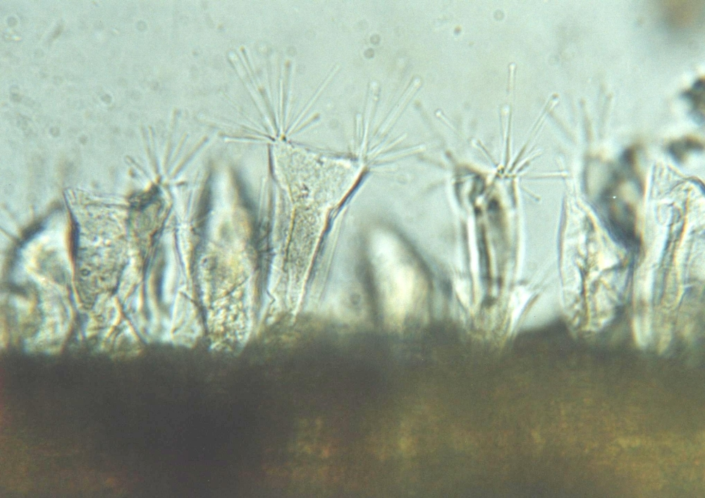 сосновый бор от паразитов